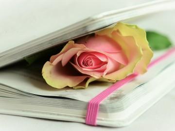 """Participación en """"El Libro blanco de la Educación"""""""