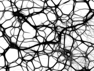 El autismo podría tener como una de sus causas el crecimiento excesivo de nuevas conexiones cerebrales