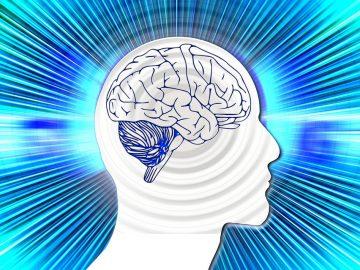 Hallan alteraciones cerebrales comunes al TEA, TDAH y TOC